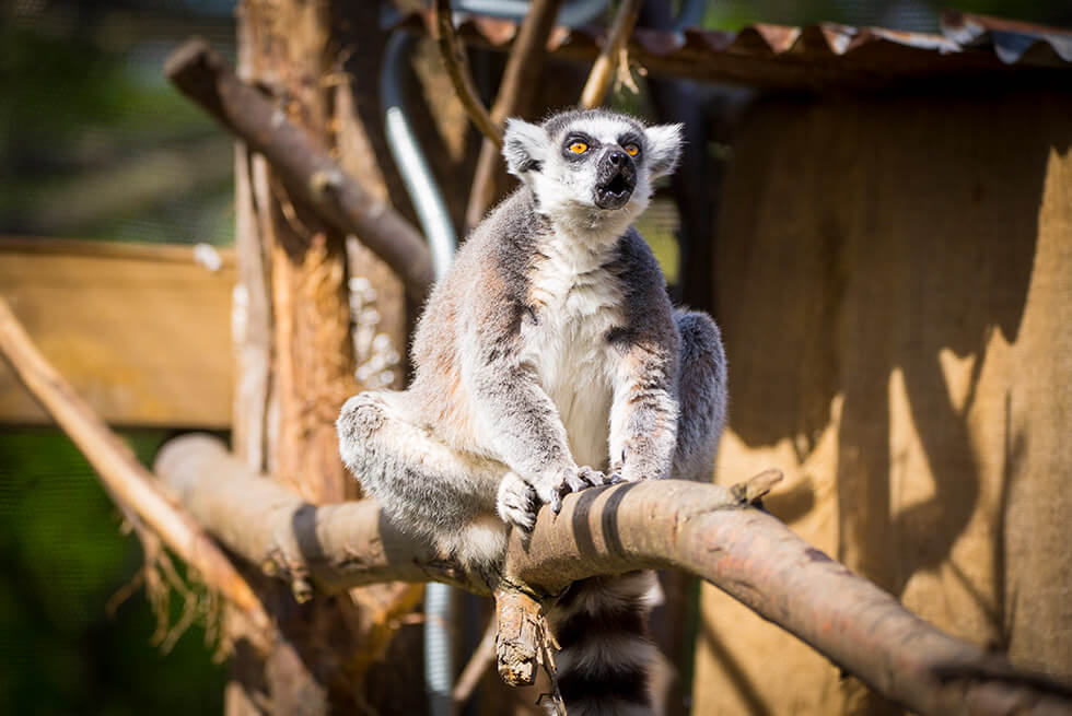 London-Zoo-Experience-Package at Montcalm Marble Arch